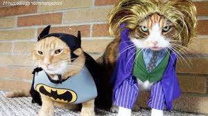 cats in ridiculously adorable costumes funny pets youtube