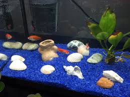ghiaia per acquari l acquario di fagiani marco acquarioitalia it