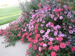 perennial flower garden ideas landscaping gardening ideas