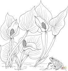 wild calla or water arum coloring page free printable coloring pages