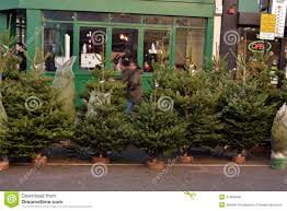 christmas trees for sale editorial photo image 47666446