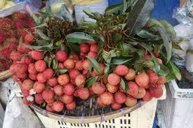 fruit similar to lychee more tropical fruits u2013 ramblin u0027 wedells