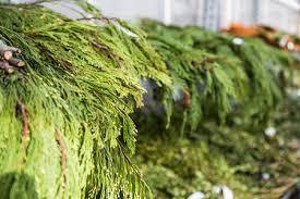 keeping garland fresh