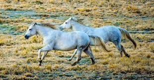 Colorado Photographers Dude Ranch Photography Workshops Colorado Luxury Ranch Resort