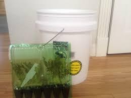 planting fall vegetables in 5 gallon buckets regen farms
