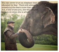 nosey the amazing elephant home facebook