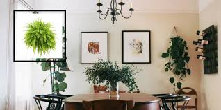 Dining Room Suits Air Cleaning Plants That Will Make Your Dining Room Cry For More