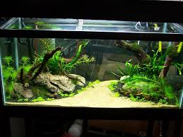 Best Substrate For Aquascaping Aquascaping Designs As Wonderful View For Aquarium Front View Of