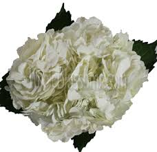 hydrangea white online shop for white hydrangea wedding flower