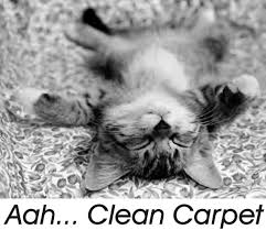 Carpet Cleaning Meme - it s not magic it s just big daddy s carpet cleaning in milwaukee