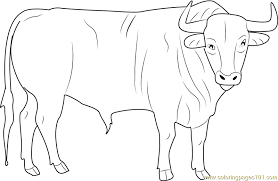 black bull coloring free bull coloring pages