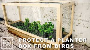 Buy A Planter Protect A Planter Box From Hungry Birds Youtube