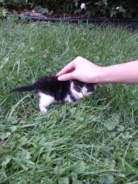 found a kitten in my backyard today aww