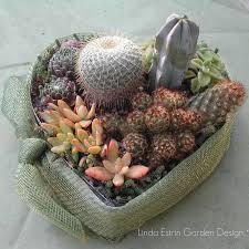 Succulent And Cacti Pictures Gallery Garden Design 17 Best Succulents U0026 Cacti Images On Pinterest Succulents Cacti