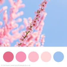 pink colors colour palette inspiration u2014 beautiful simplicity