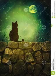black cat on rock wall halloween night stock illustration image