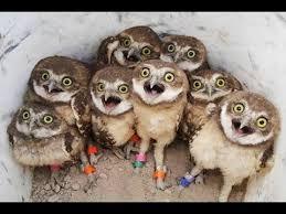 Superb Owl Meme - superb owl party meme generator imgflip