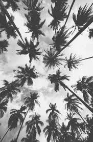 black and white wallpapers fotolip com rich image and wallpaper
