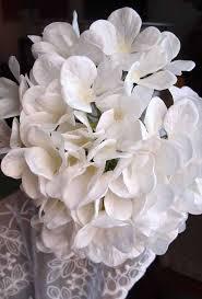 hydrangeas flowers white lace hydrangeas flowers