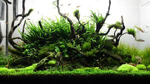 glass canvas aquascape youtube gaming