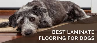 Best Flooring With Dogs Best Laminate Flooring Options For Dogs 2018 What To Look For