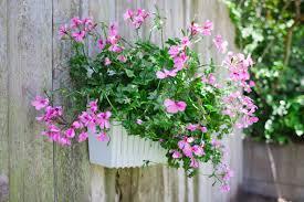 living wall planter shop verticalgarden co nz