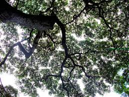 tree ceiling by aggiepuff on deviantart