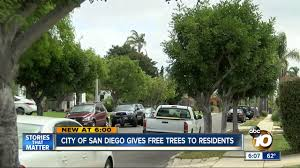 Tree San Diego City Of San Diego Gives Free Trees To Resident