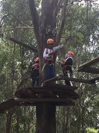 sydney the hills treetops sydney src tree tops adventure u2013 liverpool