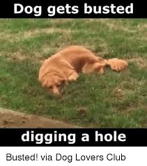 Lovers Meme - 25 best memes about dog lovers dog lovers memes