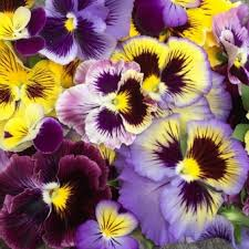 Where To Buy Edible Flowers - buy edible flowers online the flower deli