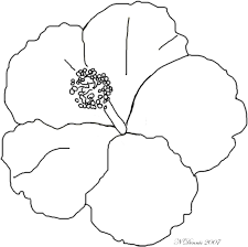 new hibiscus coloring page 51 on line drawings with hibiscus