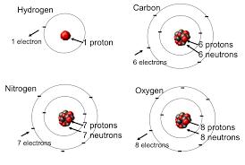 basic cell biology