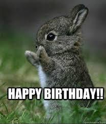 Funny Rabbit Memes - bunny birthday meme funny happy birthday meme