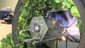 6 week volksgarden test with hydro grow u0027s vertical light youtube