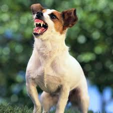 Which State Has The Most Dog Owners Per Capita According To 2016 Stats Jack Russell Tops Cops U0027 List Of Dogs Most Likely To Bite Humans