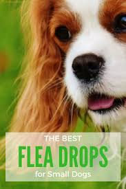 what are the best flea drops for small dogs 2017