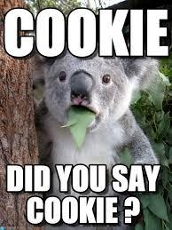 Cookie Meme - cookie surprised coala meme on memegen