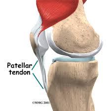 Back Knee Anatomy Knee Anatomy Eorthopod Com