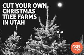 cut your own christmas tree farms in utah the salt project