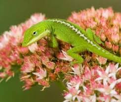 safe plants for reptiles