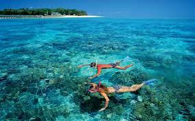 Florida snorkeling images Snorkeling in fort lauderdale snorkel tour yolo boat rentals jpg