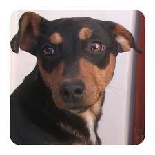 Dog Sounds Aplikacije na Google Playu