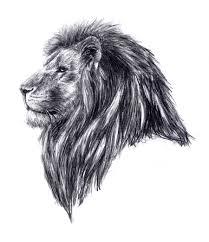 drawn profile lion pencil and in color drawn profile lion