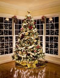 beautiful xmas tree at night u2014 stock photo steveheap 4516494