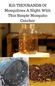 the 25 best mosquito killer ideas on pinterest insect repellent