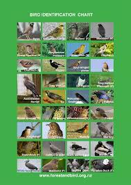 bird survey identification chart paremoremo forest and bird