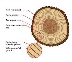 tree rings images Tree rings provide snapshots of earth 39 s past climate climate