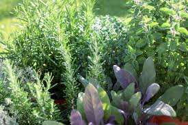 How To Build An Herb Garden Starting An Herb Garden How To Plant An Herb Garden