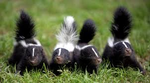 skunk related links